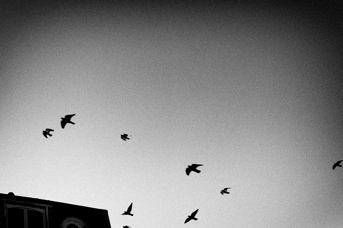Virgile Laguin – Diary   18.12.2016      Photography