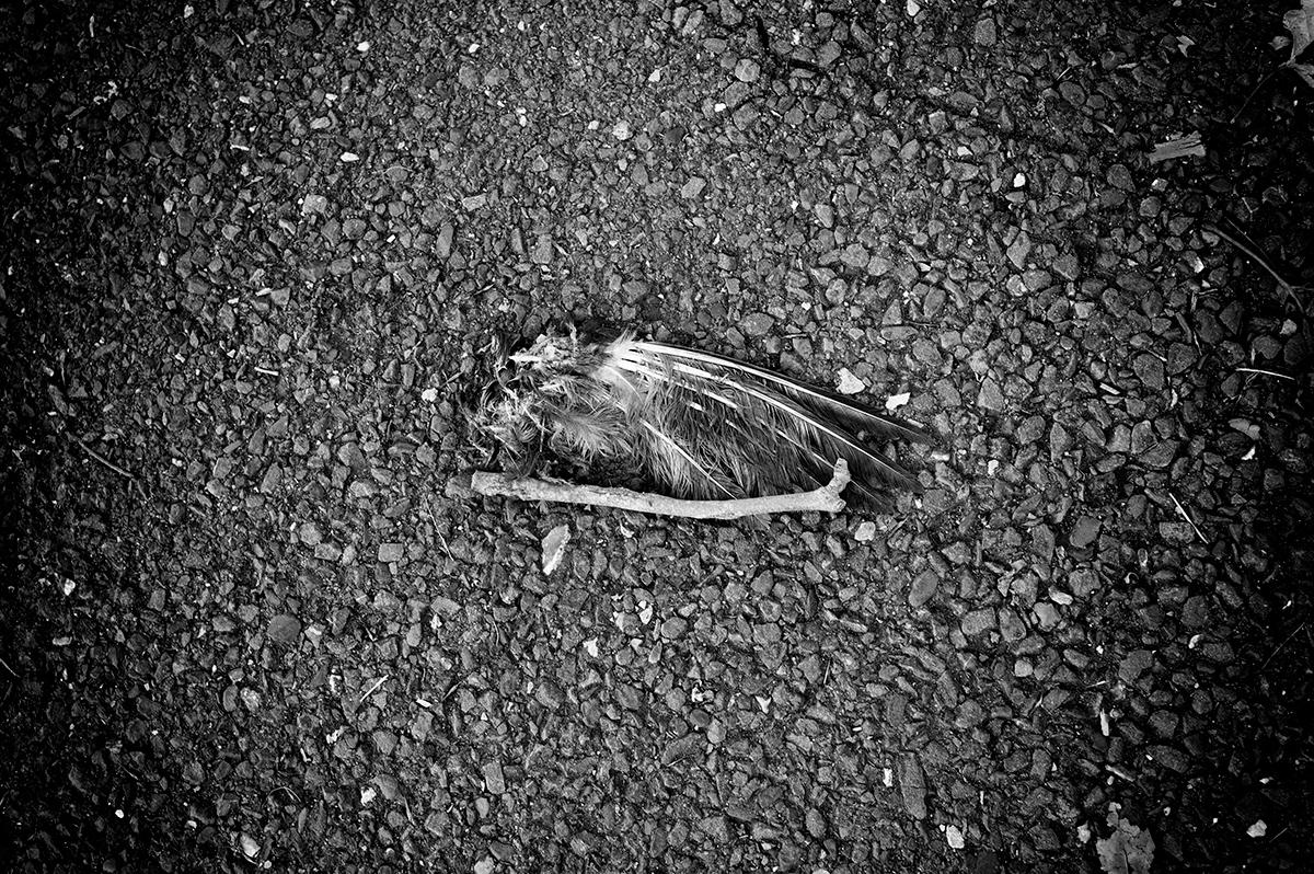 Virgile Laguin – Diary | 15.10.2021 |  | Photography